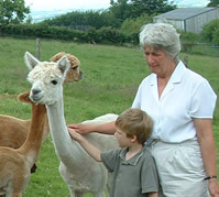 Jacquie with Alpacas